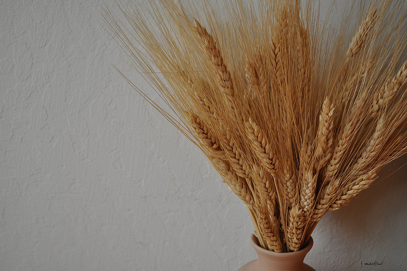 grain 1 1-15-2013.jpg