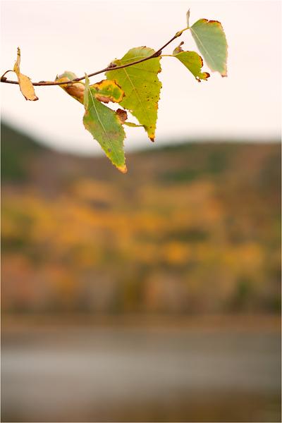 20111019_Autumn09.png