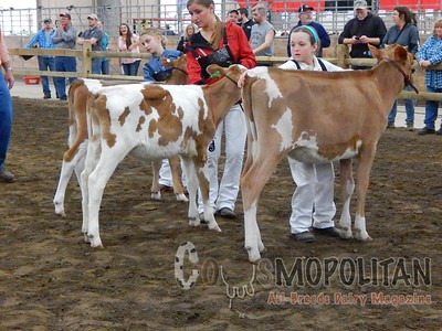 OH Spring Guernsey Show 2016