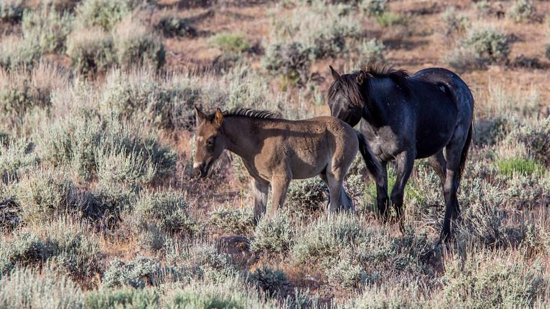 Wild Mustangs 2019-10.jpg