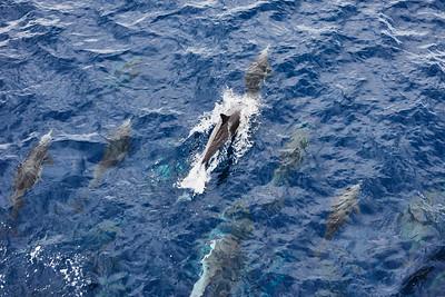 09 Dolphin Mass 2/1