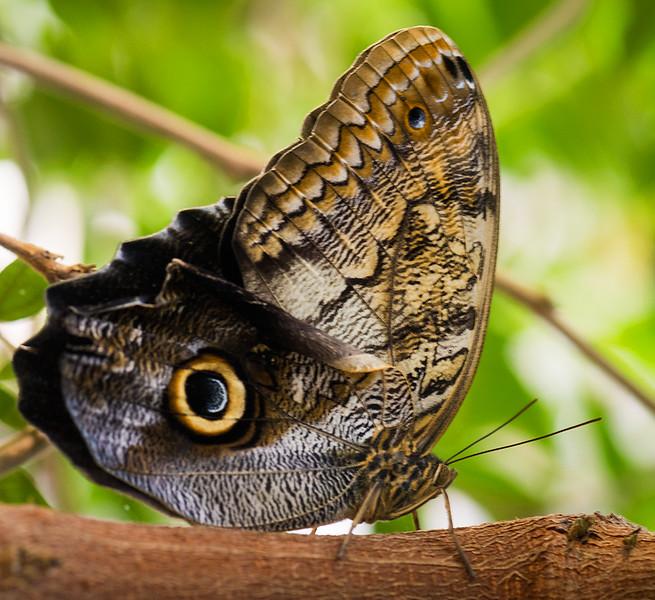 Butterfly 25.jpg