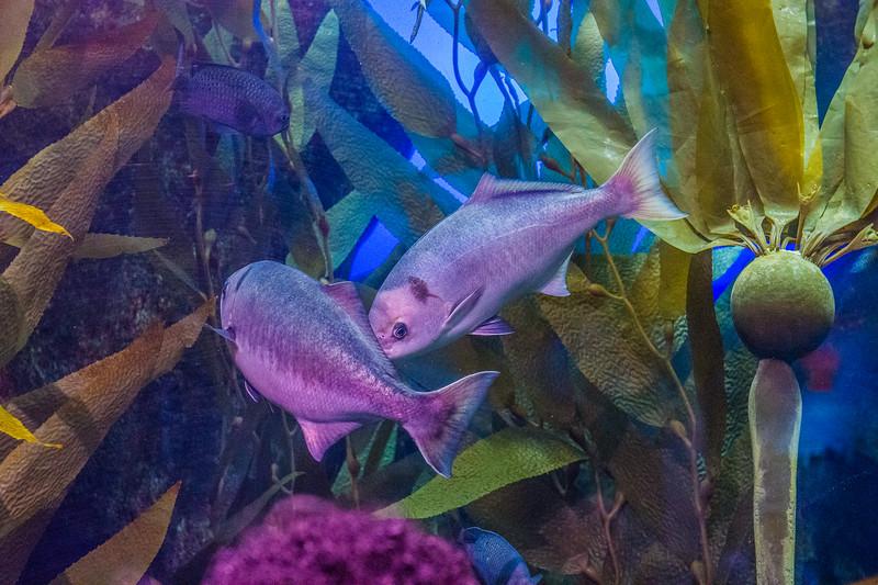 GA Aquarium with Linc, Ali & Abe-140.jpg