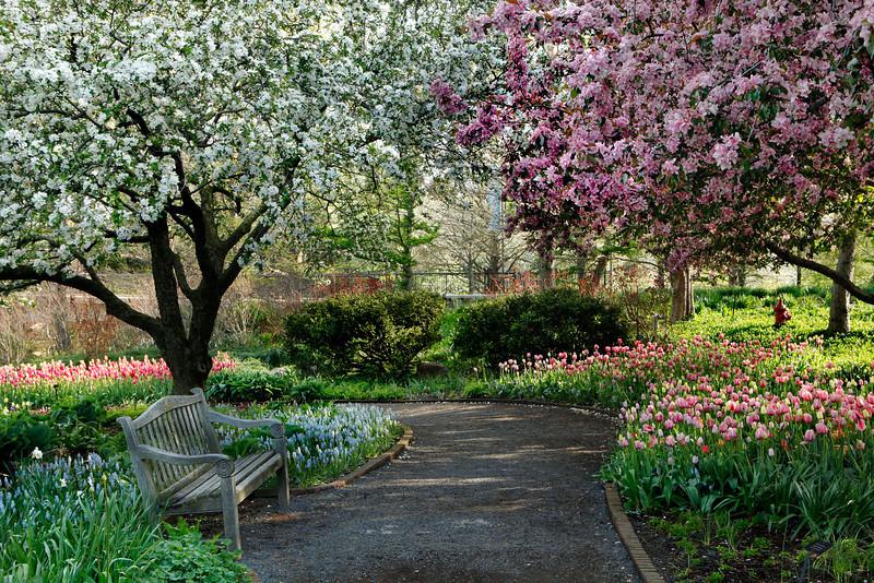 Chicago Botanic Garden tulips, crabapple trees and bench