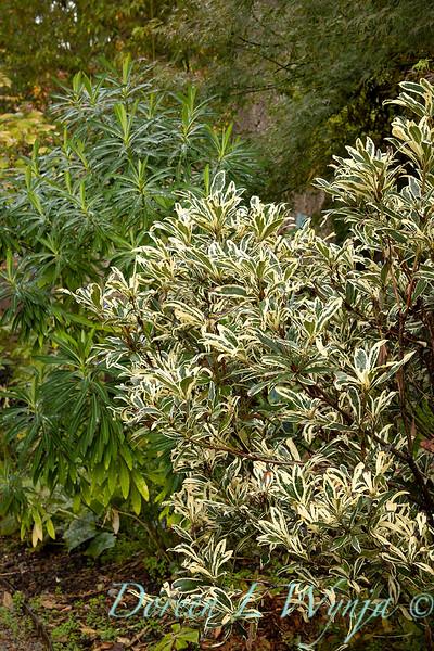 Dietrick fall garden_2100.jpg