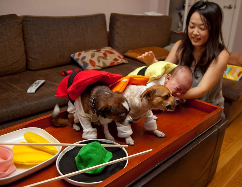 Dog-sushi-halloween-62.jpg