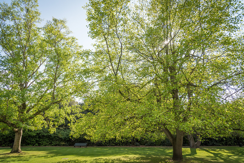 Greenwich park is a beautiful park anytime of the year