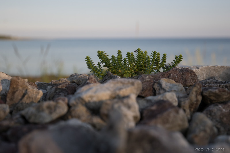 20190725_Saaremaa_KaralaKatri_223_2000.jpg