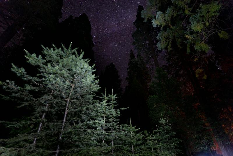 Sequoia_0809.jpg