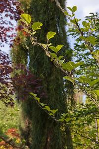 Oregon garden and neighborhood