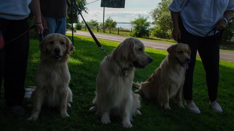 PuppyParty18-601.jpg