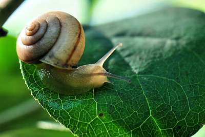 Snails and Invertebrates