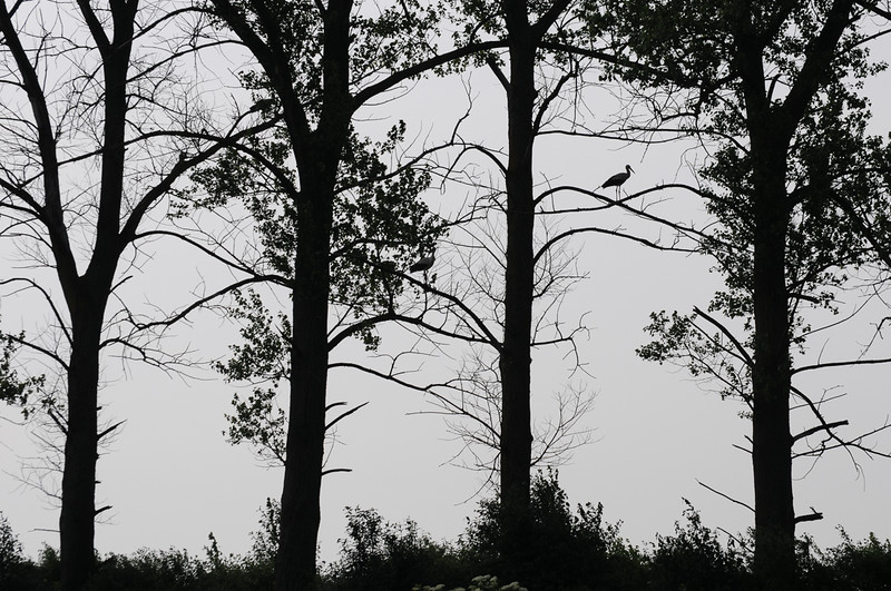 szpaler drzew.jpg