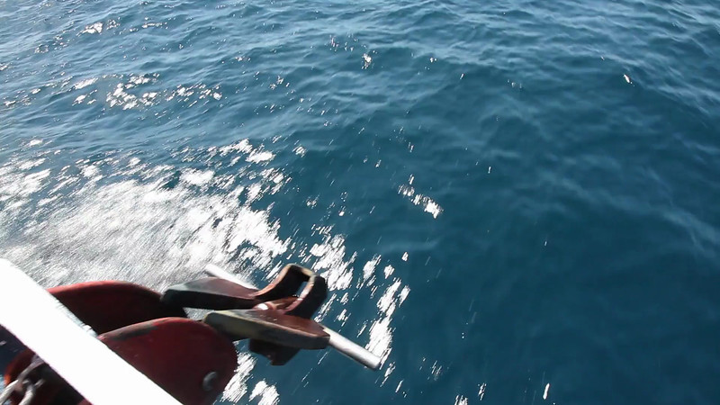 Dolphins swimming and jumping in front of our boat as we navigate.