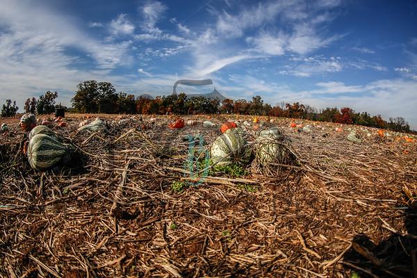 Brookfield Pumpkins, LLC.