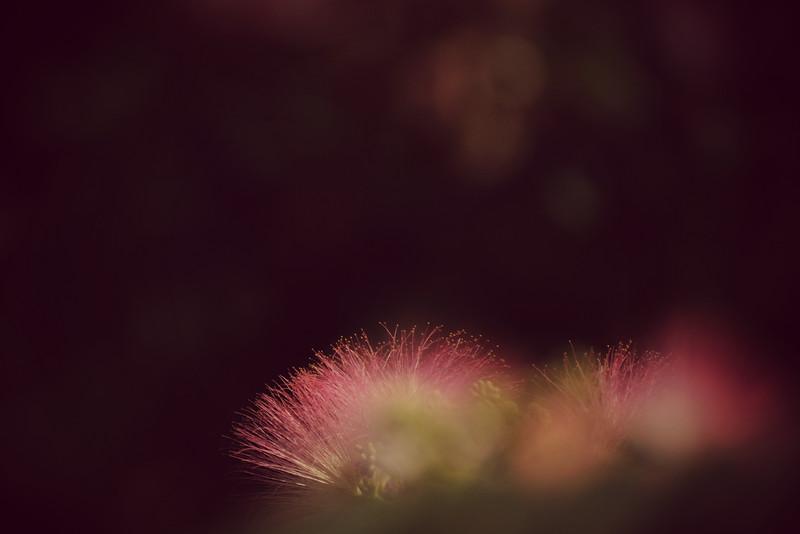 LTD_2012-05-23_0654a_2