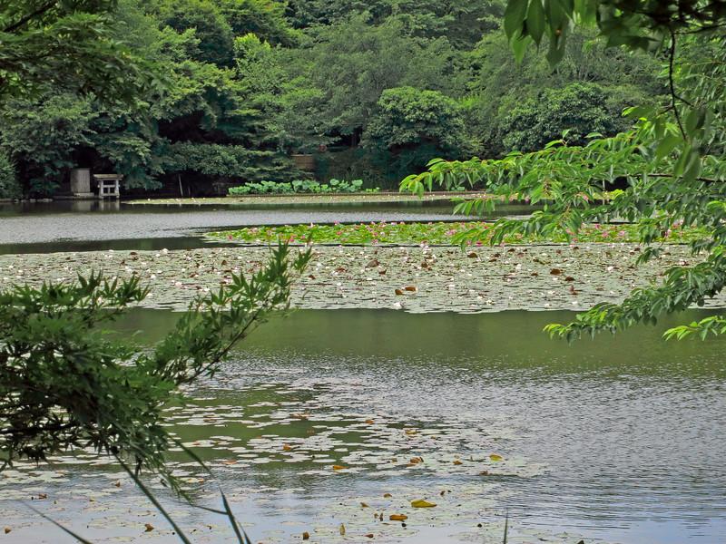 1971 Ryoanji Temple, Kyoto.jpg