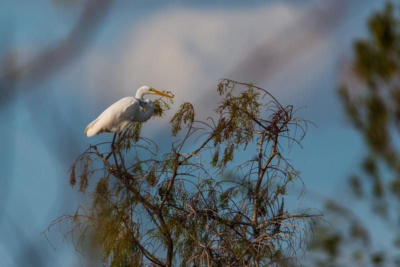 Everglades (5 of 37).jpg
