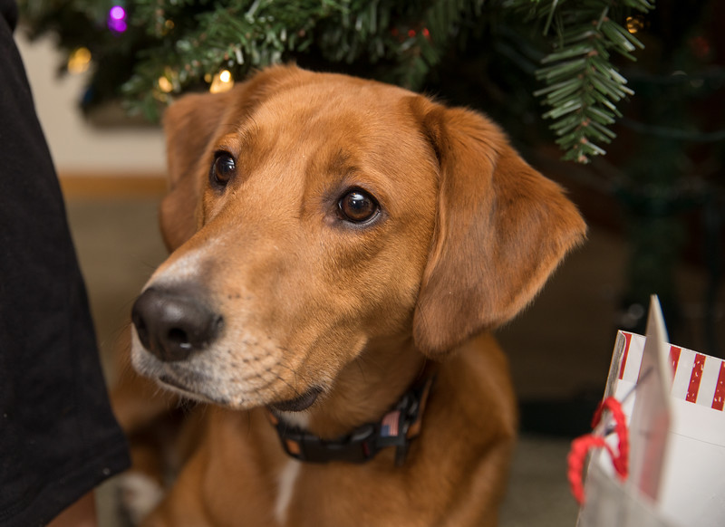 Ziggy under the christmas tree.jpg