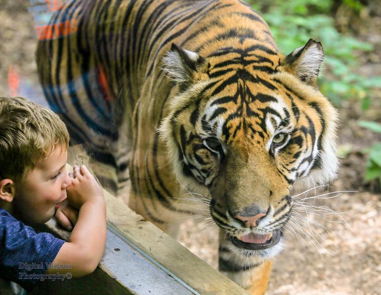 2016-07-17 Fort Wayne Zoo 582LR.jpg