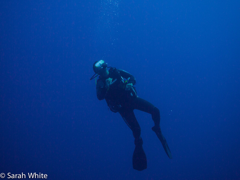 Project Shark 2013-132.jpg