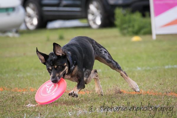 _MG_2952Up_dog_International_2016_StephaniellenPhotography.jpg