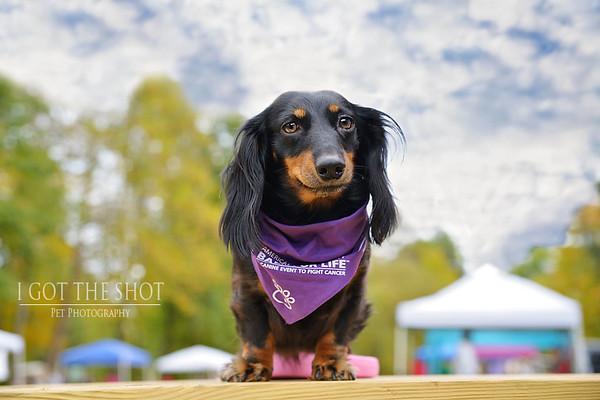 Bark For Life 2016