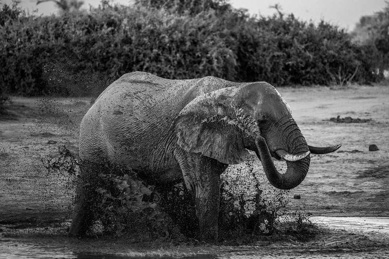 Botswana_June_2017 (4240 of 6179).jpg