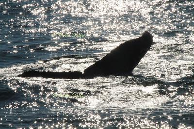 Puerto Vallerta - Whales