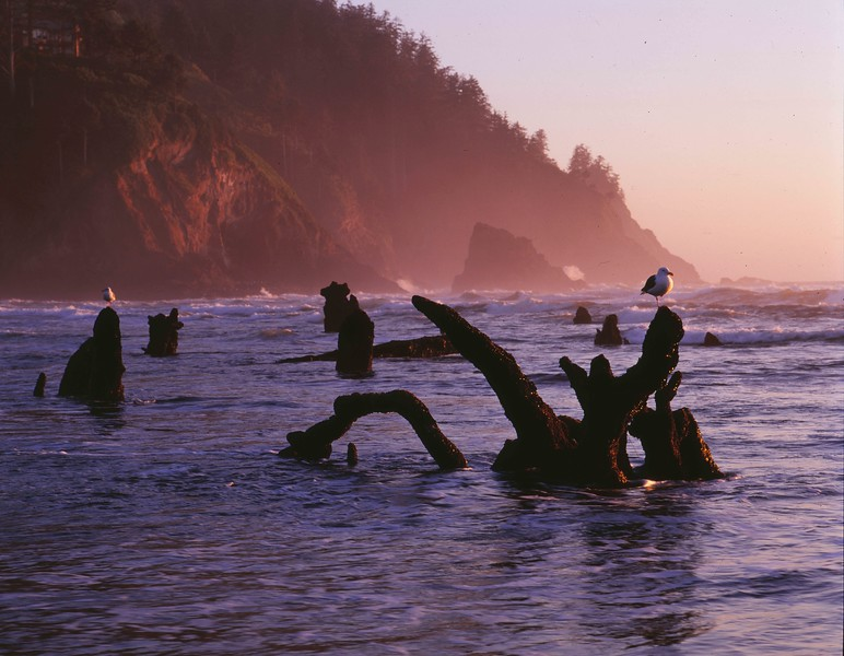 Neskowin stumps looking south sf.jpg
