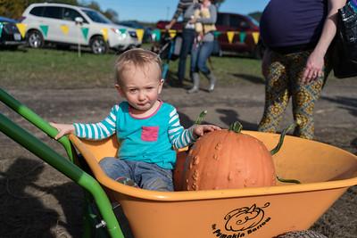 Pumpkin Picking 2017