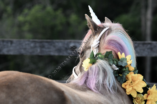Quickie the Unicorn 072120