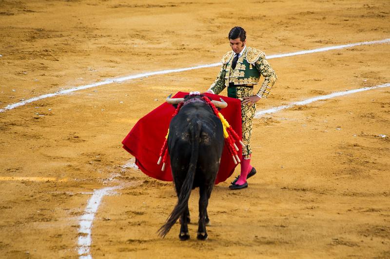 Bullfight13.jpg