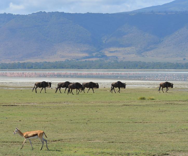 East Africa Safari 417.jpg