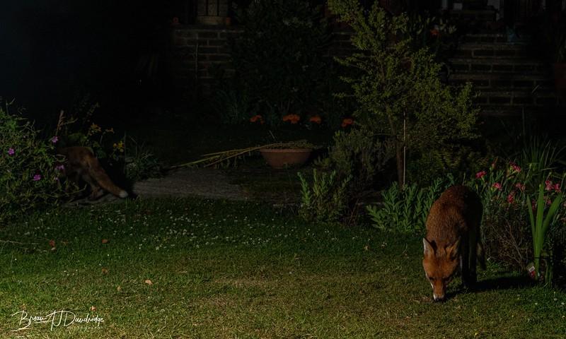 Garden Night Shoot-7343.jpg