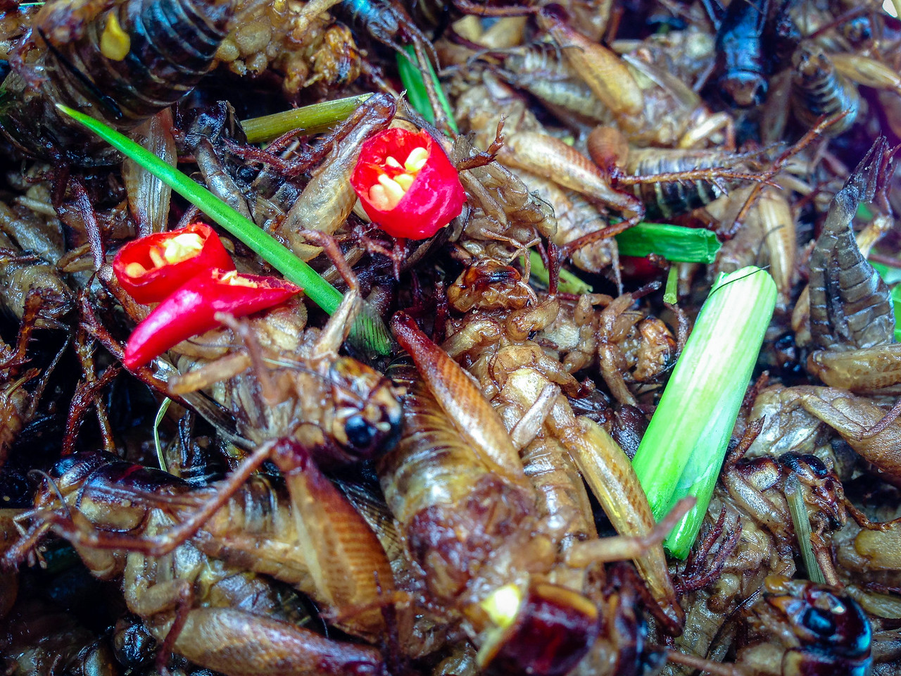 Stir-fried with Red Chile, Green Onion, Lemon Grass and a Little Salt is My Favorite Cricket Recipe