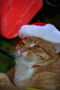 John's Christmas 2012 pics