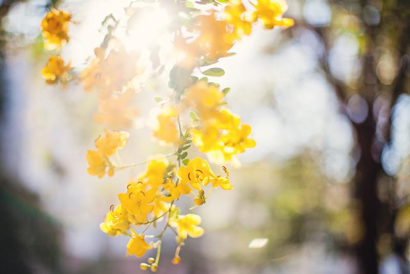 yellow-flowers-9.jpg