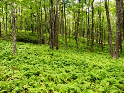 Bear Creek Preserve