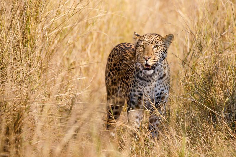 Botswana_0818_PSokol-1536-Edit.jpg