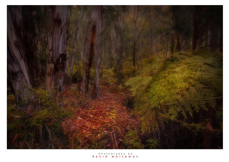 Foggy Morning in the Bush