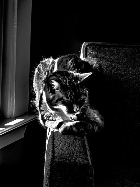 A spunky tabby kitty
