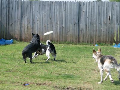 Dog Pics September 20th, 2008