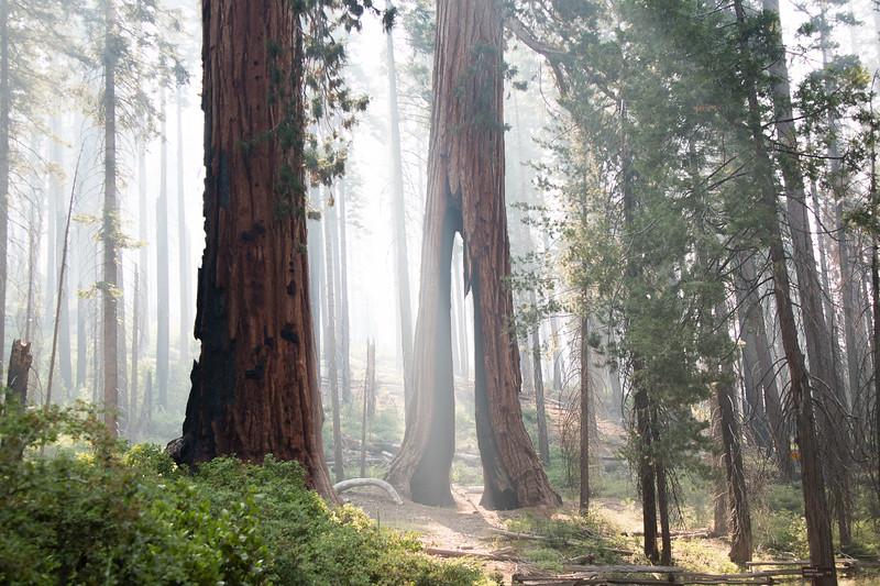 Clothespin-Tree.jpg