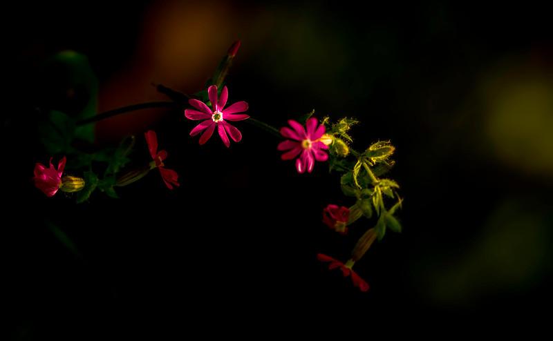 The Magic of Light-440.jpg