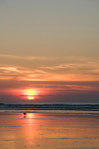 _DSC5797_sunrise_bird