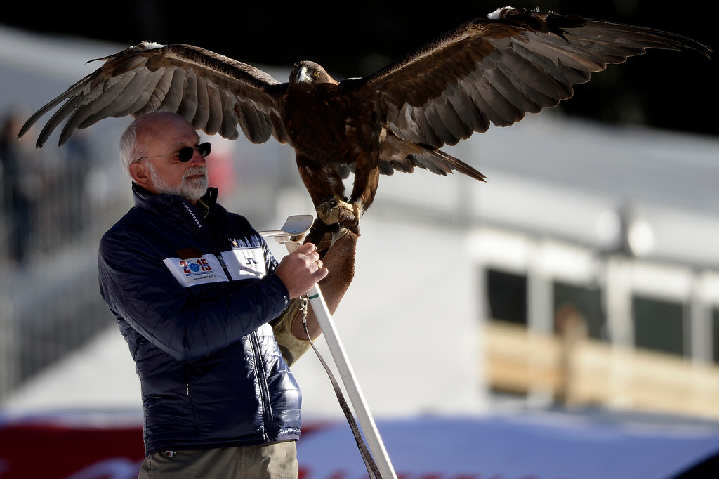 . A handler attempts to control an eagle after the ladies\' slalom. FIS Alpine World Ski Championships 2015 on Saturday, February 14, 2015. (Photo by AAron Ontiveroz/The Denver Post)