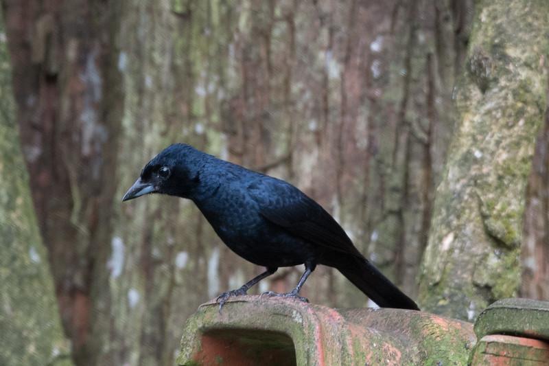 19-Sept Brazil Birds-7867.JPG