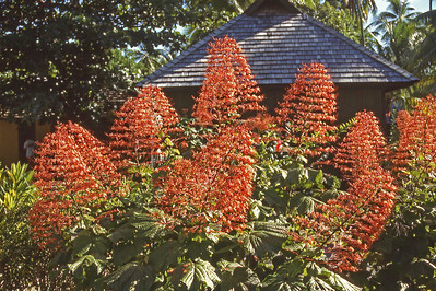 Moorea Flowers