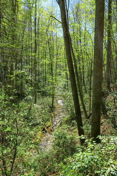 Laurel Creek Trail -- 2,520'